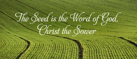 The Word of God takes root in good soil